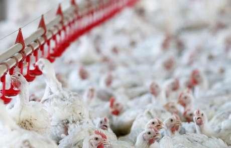 Visão geral de fábrica produtora de frango, no Paraná  31/05/2016 REUTERS/Rodolfo Buhrer