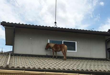 Pequeno cavalo se refugia em telhado após chuva torrencial no Japão