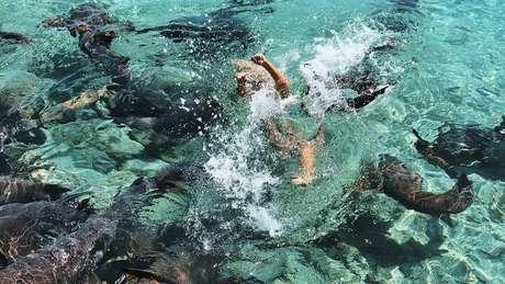 Katarina luta na água para se soltar do tubarão