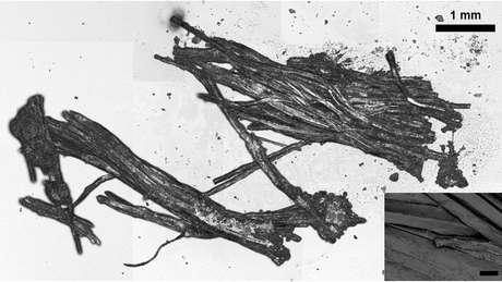 Análise do tecido da múmia permitiu descobrir os detalhes da última refeição de Ötzi