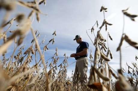Agricultor anda por plantação de soja em Minooka, Ilinóis, EUA 24/09/2014 REUTERS/Jim Young