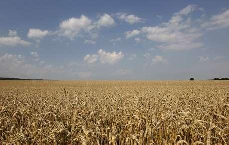 Trigo de inverno em lavoura perto de Ingolstadt, na Alemanha 06/07/2012  REUTERS/Michaela Rehle
