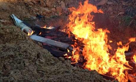 As carcaças dos crocodilos foram incineradas