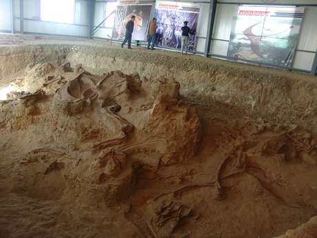 O lingwulong representa o membro mais avançado de que se tem conhecimento da linhagem dos saurópodes e se define por traços anatômicos que o distinguem dos saurópodes primitivos surgidos dezenas de milhões de anos antes.