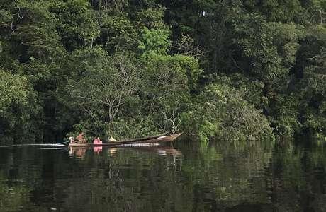 Bacia do rio Negro, no noroeste amazônico, onde população de ariranhas vem se recuperando
