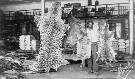 Casa de comércio de peles em Manaus, que exportava produtos para outras partes do mundo