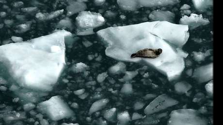 O derretimento do gelo do Ártico pode reduzir a quantidade de raios solares refletidos de volta para o espaço