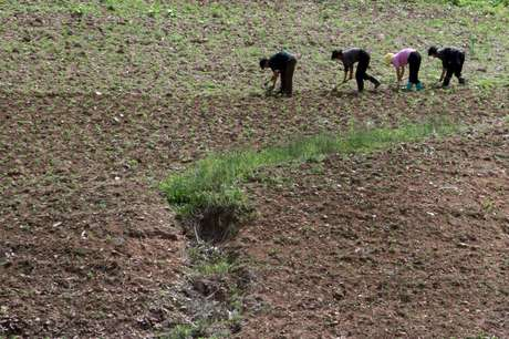 Fazenda em província norte-coreana de Phyongan do Norte 20/06/2015 REUTERS/Jacky Chen