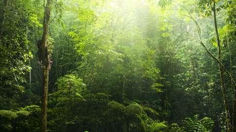 Segundo o estudo da Universidade de Exeter, a natureza já criou a forma mais eficiente de retirar carbono da atmosfera