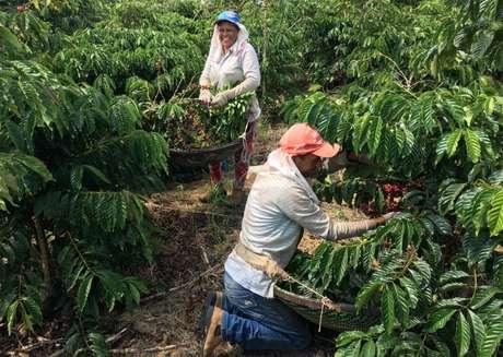 Trabalhadores colhem café em São Gabriel da Palha, Espírito Santo, Brasil 02/05/2018 REUTERS/Jose Roberto Gomes