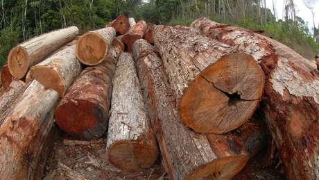 Somente troncos certificados estão autorizados a circular pelas rodovias brasileiras
