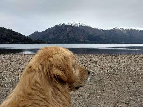 Faça como o cãozinho e tire um tempo para contemplar o Lago Campanário