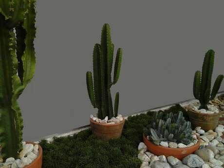 19. Cactos altos podem ser colocados em vasos de cerâmica. Projeto por Alalou Paisagismo.