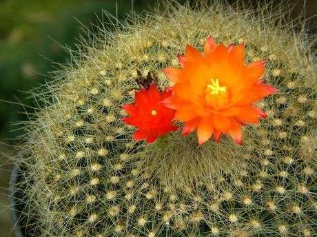 4. Um tipo de flor de cacto com cores de encher os olhos.