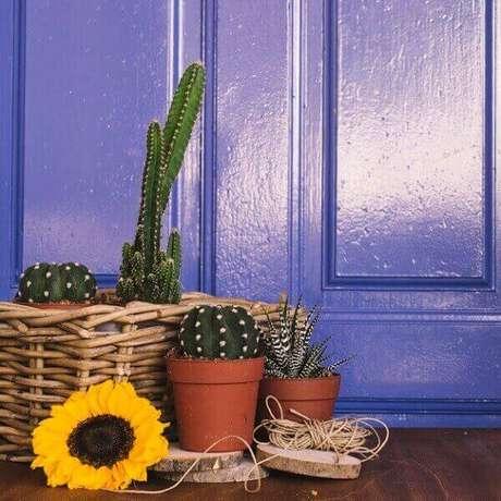 34- Um cesta de vime com alguns vasos de cactos é ideal para arranjos para decorar festas. Fonte: Freepik