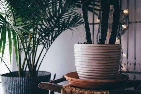 38- Os cactos plantados em vasos decoram as salas de todos os estilos. Fonte: Unplash