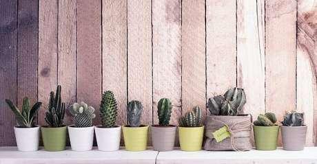 3. Os vasos com mini cactos em tons diferentes podem ser colocados enfileirados em espaços estreitos.