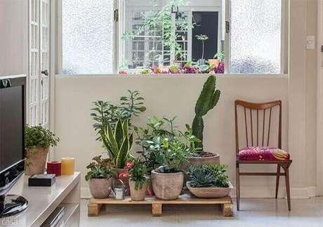 45- O vaso com cactos de porte grande se destaca na coleção de plantas. Fonte: Assim que faz