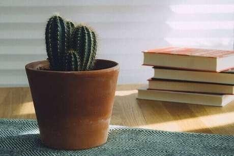 46- O vasinho com cactos pequeno decora a mesa lateral da sala de leitura. Fonte: Unplash