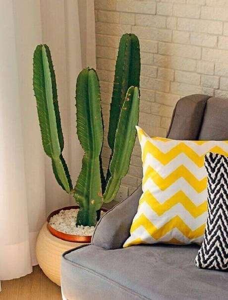 53- No cantinho da sala você pode colocar vasos de cactos para complementar a decoração. Fonte: Pinterest