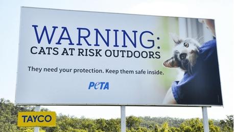 Uma organização de defesa dos animais pagou por vários outdoors dizendo para os donos manterem os bichos em casa