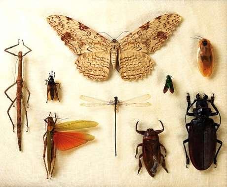 Perda de coleções de insetos abrigadas pelo Museu podem prejudicar pesquisas para além do Brasil