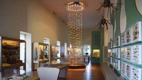 Andar onde ficavam insetos e outros animais invertebrados no Museu desabou; acervo pode ter sido completamente destruído
