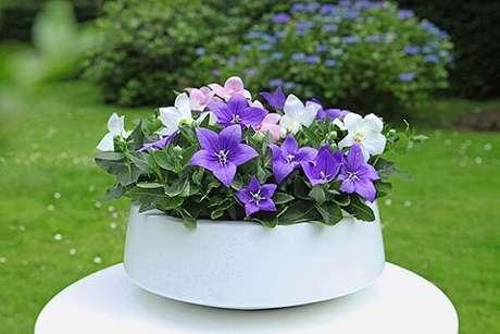 32- Vaso branco com plantas roxas.