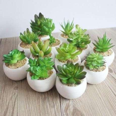 12 – Vários tipos de plantas suculentas em vasinhos brancos.