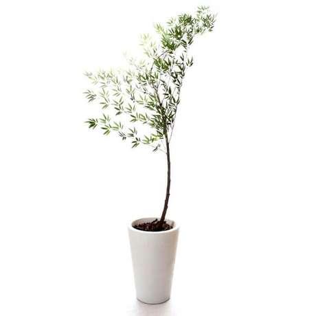 10 – A Bambu-mossô é uma planta chinesa e exótica que necessita de pouco sol pelas manhãs.