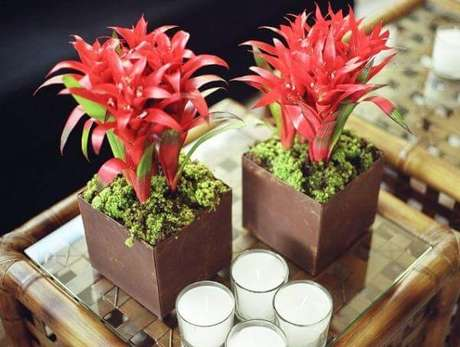 4- As bromélias são tipos de plantas resistentes que se adaptam facilmente em cômodos escuros.