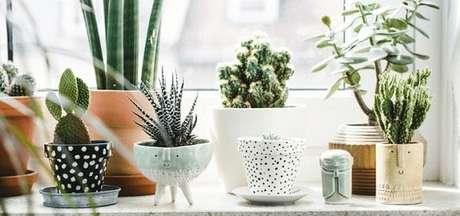 30 – Vasos de plantas com diversos formatos e tamanhos.