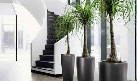 35 –Plantas ornamentais em vasos iguais.