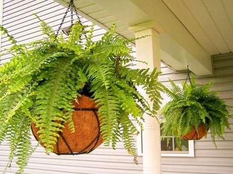 3- As samambaias em vasos são muito usadas para decoração de áreas externas e internas.