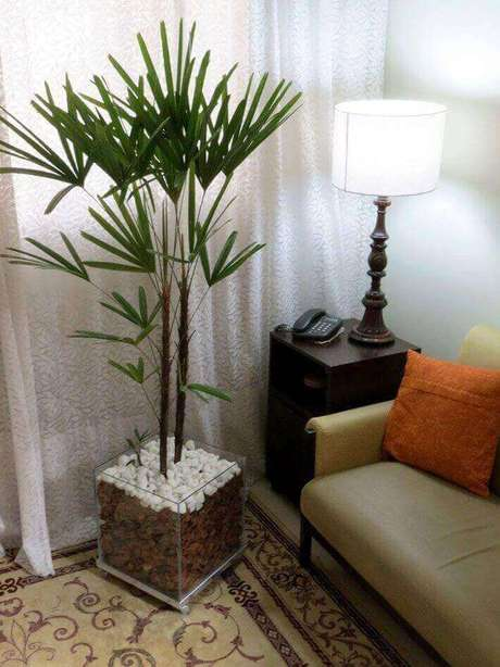 1- A Palmeira ráfia é uma das espécies mais utilizadas para decorar o interior da casa.
