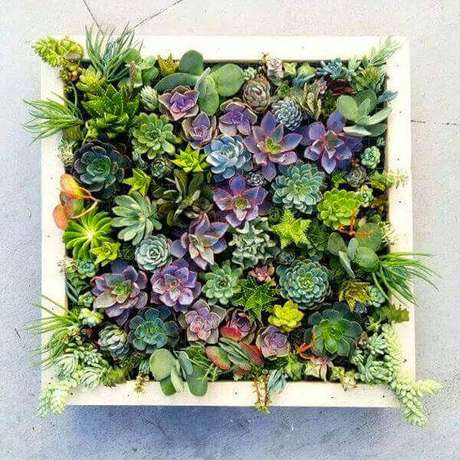 13 – Plantas suculentas em jardim vertical.