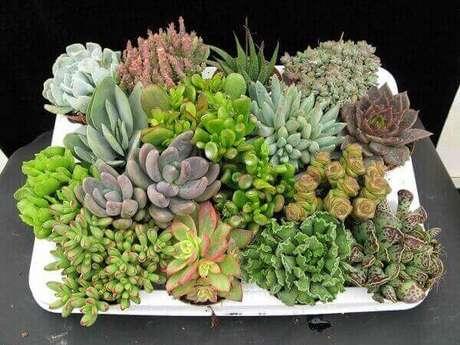 11 – Recipiente com plantas suculentas.
