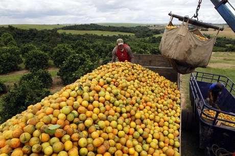 Trabalhadores trabalhando em transporte de laranja em Limeira  13/01/2012 REUTERS/Paulo Whitaker