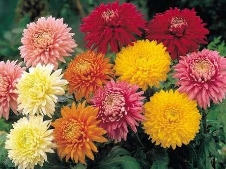 14. Existem mais de cem espécies desses tipos de flores
