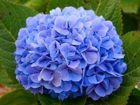 20. A hortênsia são tipos de flores que gostam de frio e devem ser cultivadas em regiões de altitude