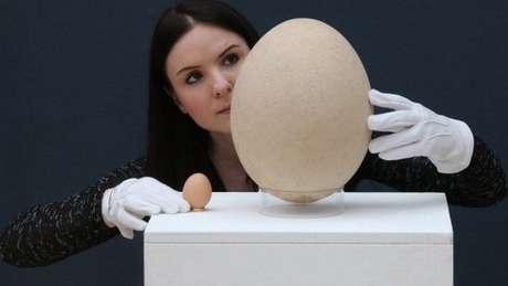 O ovo gigante do pássaro pré-histórico equivalia a 150 ovos de galinha