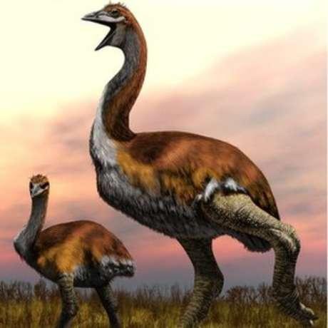 O pássaro tinha patas e pescoço grossos