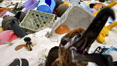 A ingestão de plástico tem provocado a morte de diversos tipos de animais, desde tartarugas até aves