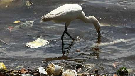A quantidade de plástico no oceano deve triplicar em uma década, segundo especialistas, a menos que o lixo seja contido