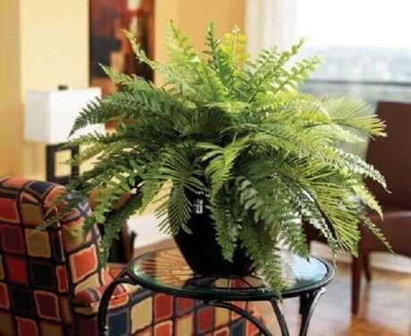 17- A samambaia plantada em vaso sobre a mesa lateral enfeita a sala. Fonte: Pinterest