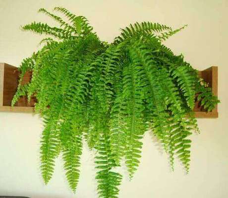 27- As prateleiras são ideais como suporte para samambaia. Fonte: Our House Plants