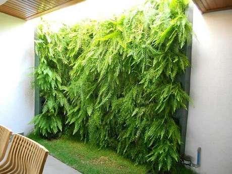 31- Jardim vertical utiliza somente samambaias na sua formação. Fonte: Decorando Casas