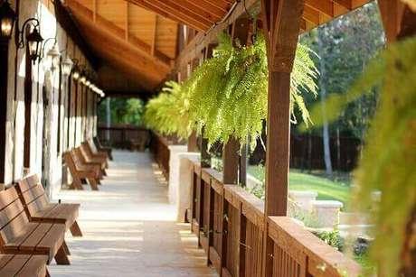 36- Na varanda, a samambaia foi pendurada nas vigas de madeira do telhado. Fonte: Pixabay