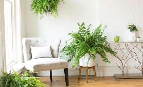 10- A samambaia é uma planta ornamental que se adapta a vários tipos de decoração. Fonte: Miracle-Gro