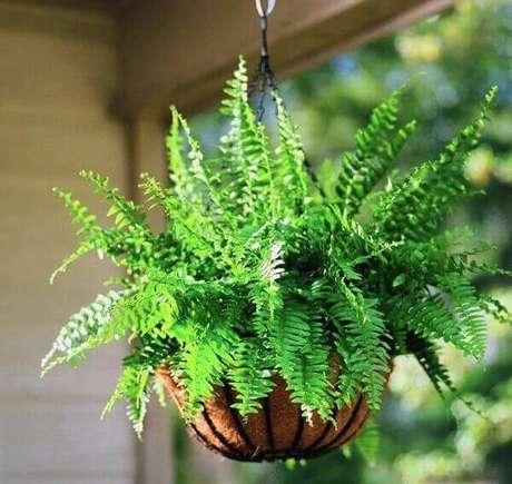 37- A samambaia plantada em vaso de fibra de coco pode ser pendurada em suportes aramados. Fonte: Quiet Corner